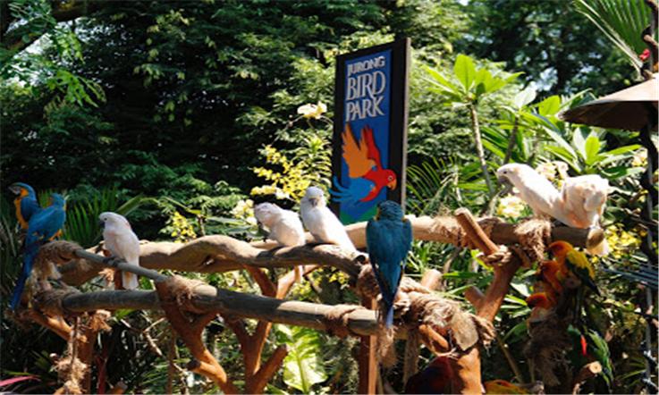 【新加坡汇款中国】新加坡文礼:务工者最踏实的家—新加坡飞禽公园|熊猫速汇Pandaremit